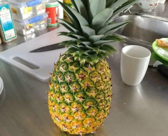 Erste eigene Ananas